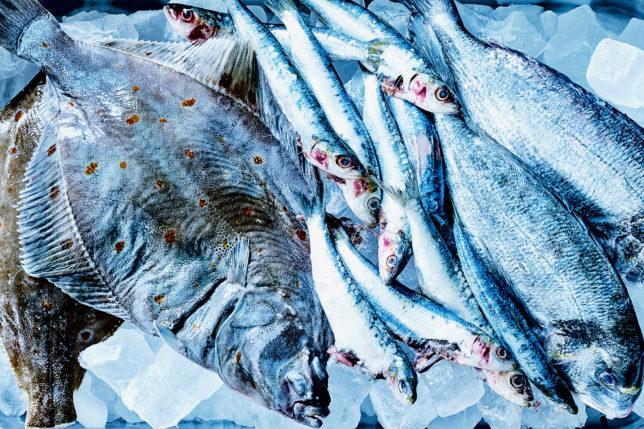 roher Fisch - Fisch Kochkurs
