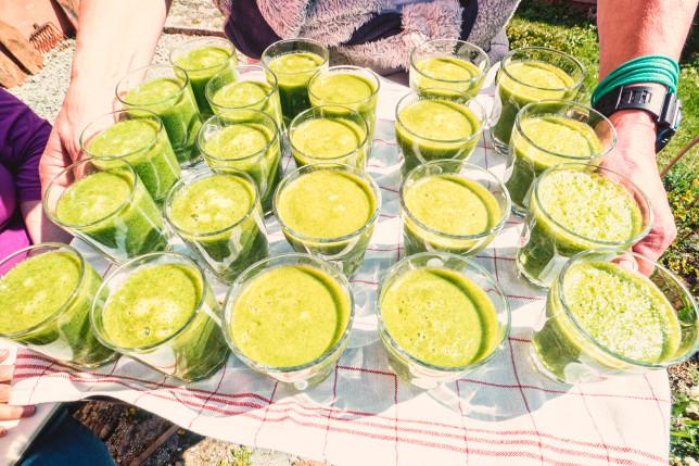 Grüne Wildkräuter-Smoothies